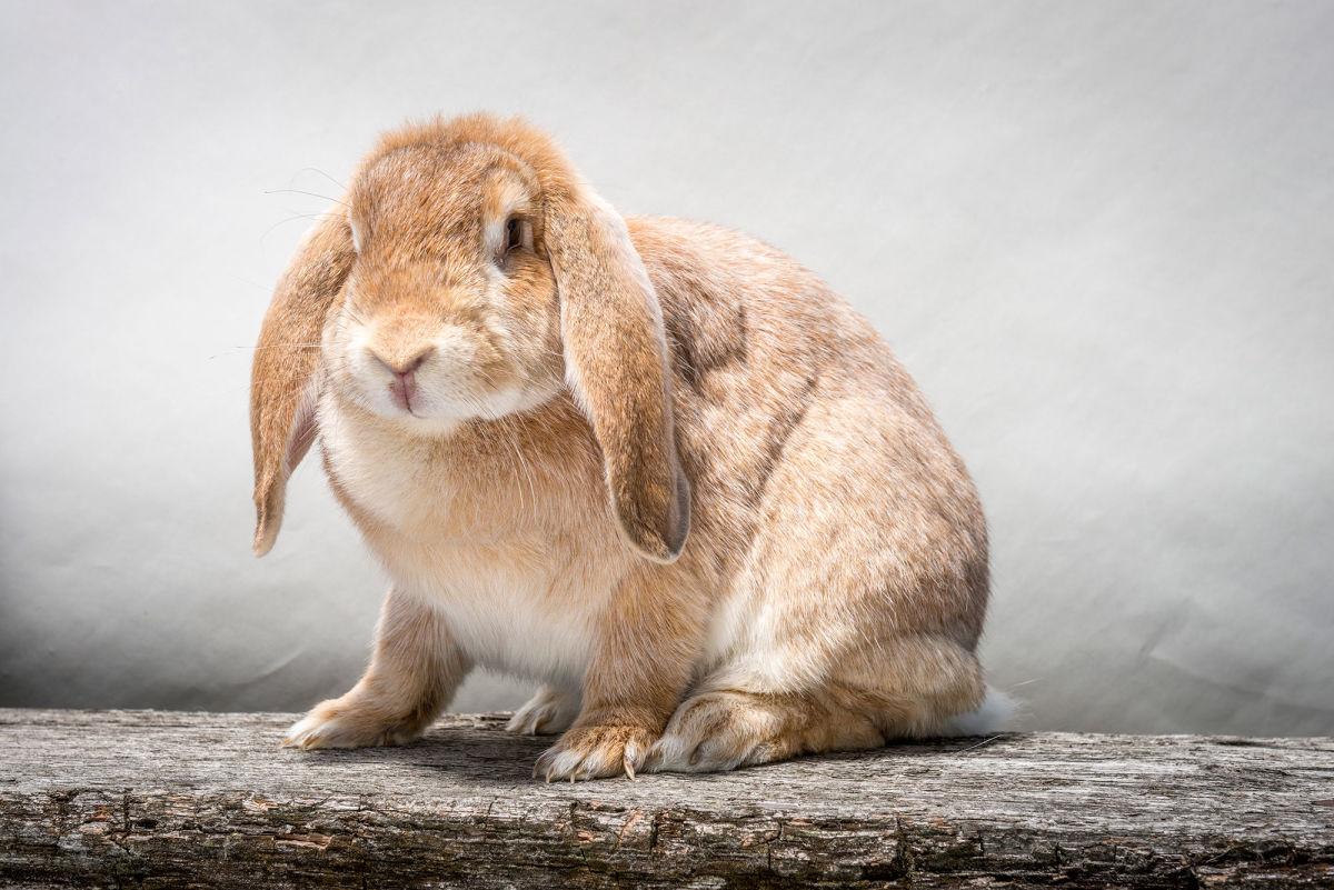 Wilson-Eating-Rabbit-1200
