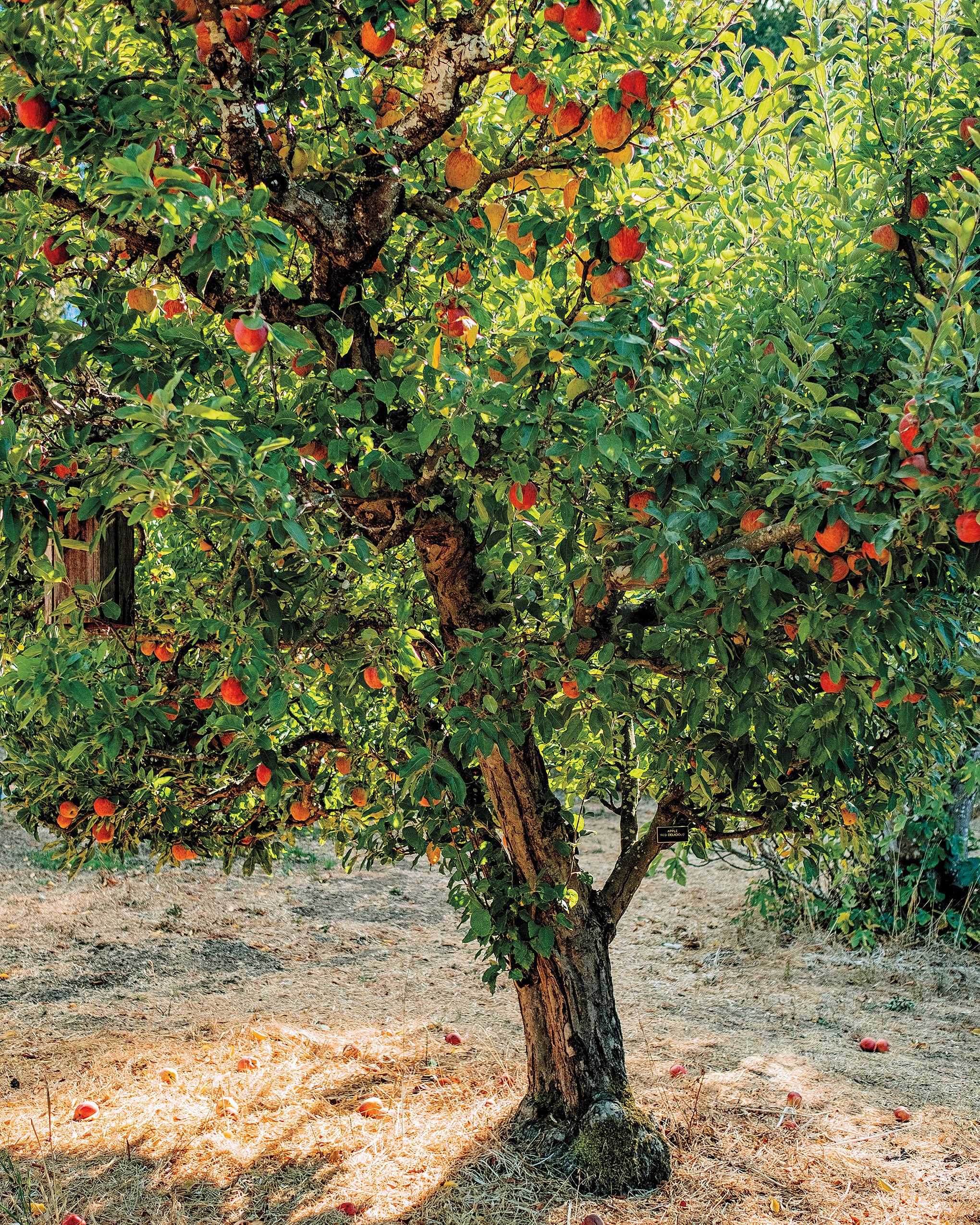 Orchards_tree_cr Lucas_Saugen_ed